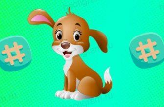 Хештеги для животных в Instagram